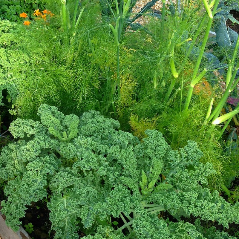 dill & kale